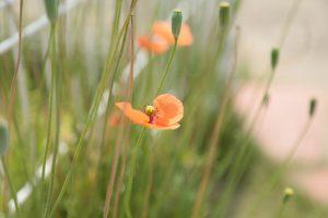 草花の写真撮影の写真その3