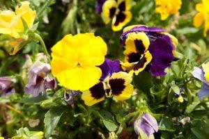 草花の写真撮影の写真その5